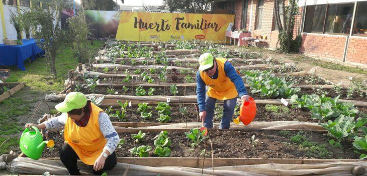 Apoyo social para agricultura de traspatio